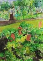 Rhubarb, Harlow Carr RHS